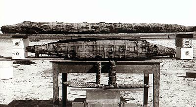 Fig. 5. Momies de crocodiles. Photo d'époque (1899-1900). © Egypt Exploration Society.